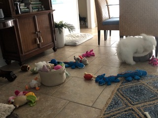 Bexley and his toys!